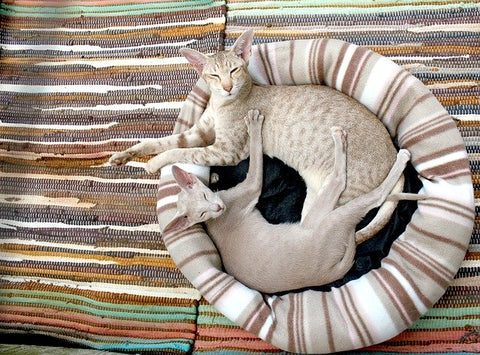 two cats in a bed together