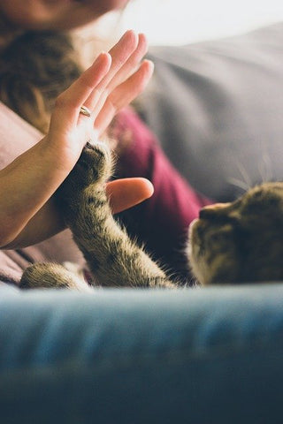 cat touching person with a paw