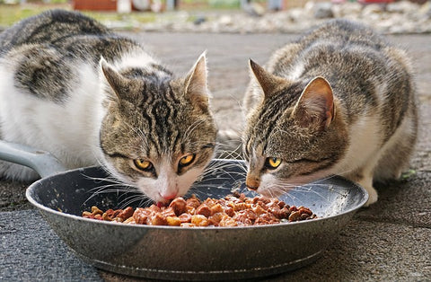 two cats eating out of a big bowl