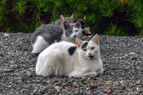 a group of feral cats
