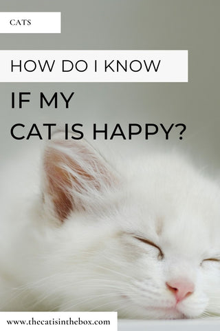 How do I know if my cat is happy - Pinterest-friendly pin