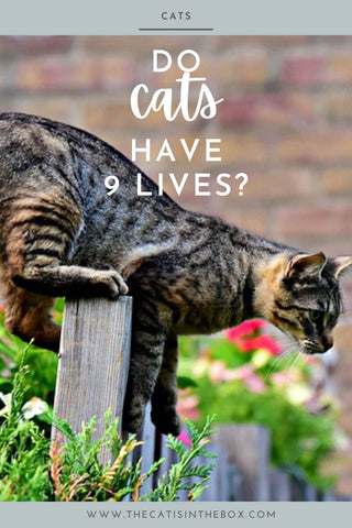 Do cats have 9 lives - Pinterest-friendly pin
