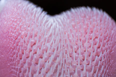 close up of a cat tongue