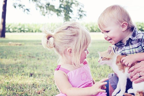 toddlers playing with an orange and white kitten