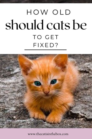 How old should cats be to get fixed? Pinterest-friendly pin