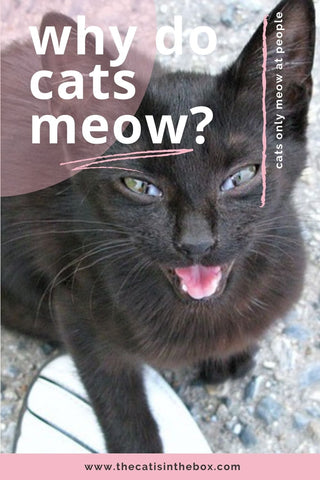 Why do cats meow? Pinterest-friendly pin