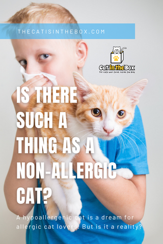 Is there such a thing as an allergy-free cat? Pinterest-friendly pin