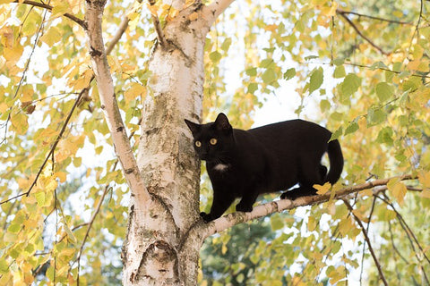 black cat outdoors in a tree