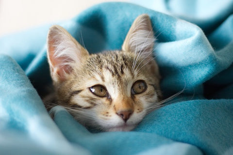Why do cats knock things over? - Pinterest-friendly pin