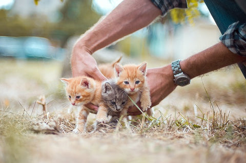 man's hands and three kittens