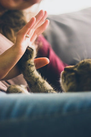 high fiving a cat