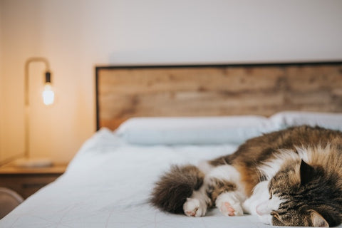 cat sleeping on a corner of the bed