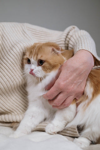 person in white sweater holding a cat
