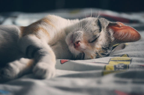 cat sleeping in a bed