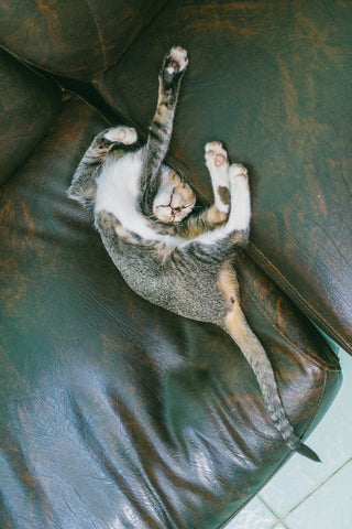 cat sleeping in a twisted position