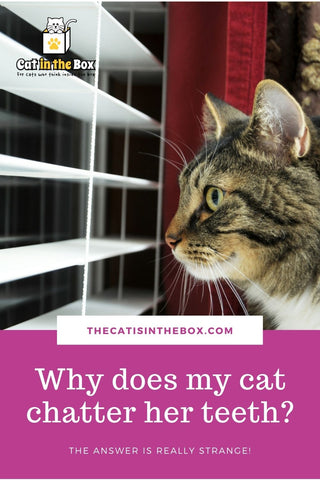 Why does my cat chatter her teeth Pinterest-friendly pin