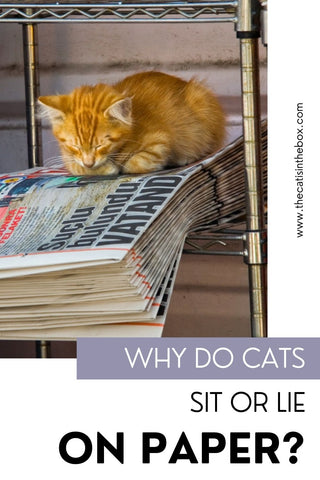 Why do cats sit or lie on paper - Pinterest-friendly pin
