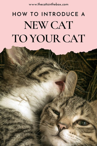 How to introduce a new cat to your cat - Pinterest-friendly pin