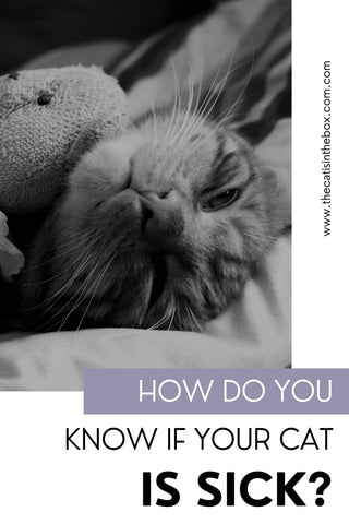 How do you know if your cat is sick?