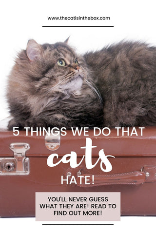 5 Things we do that our cats hate - Pinterest-friendly pin