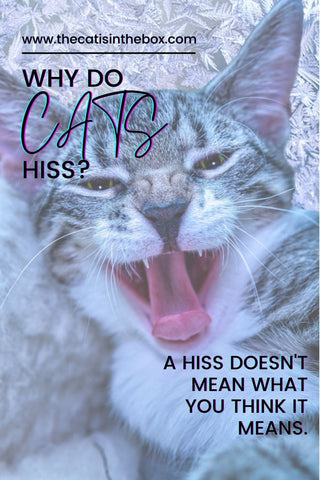 Why do cats hiss? Pinterest-friendly pin