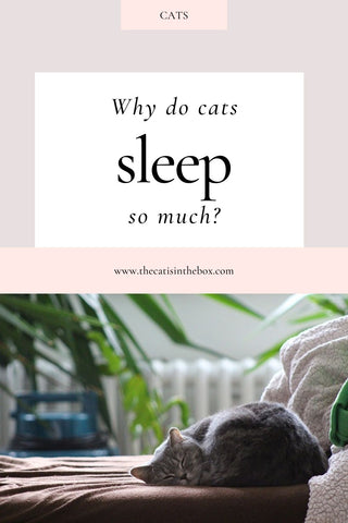 why do cats sleep so much? Pinterest-friendly pin