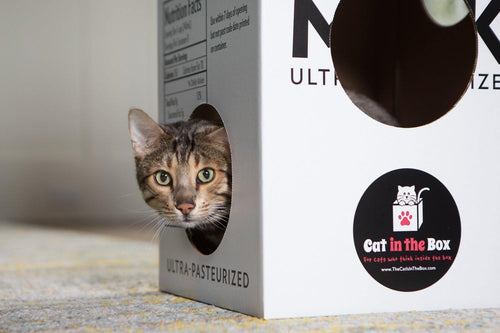 a bengal cat playing in the Mega Milk Carton