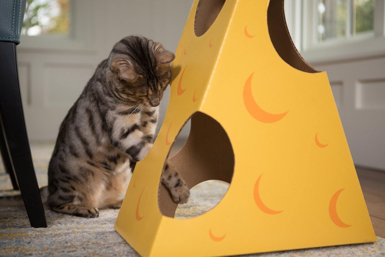 A Bengal cat playing in the Monster Cheese Wedge cardboard box toy house
