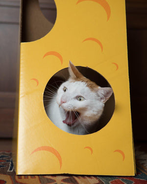 A cat playing in the Monster Cheese Wedge cardboard box toy house