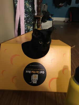 A black cat playing in the Monster Cheese Wedge cardboard box toy house