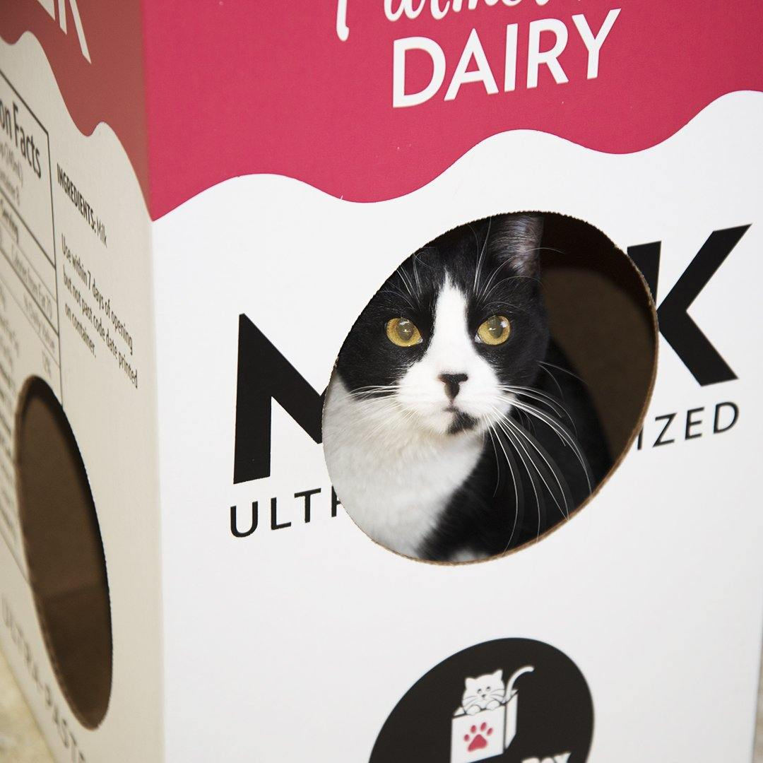 a black and white cat playing in the Mega Milk Carton cardboard box toy house