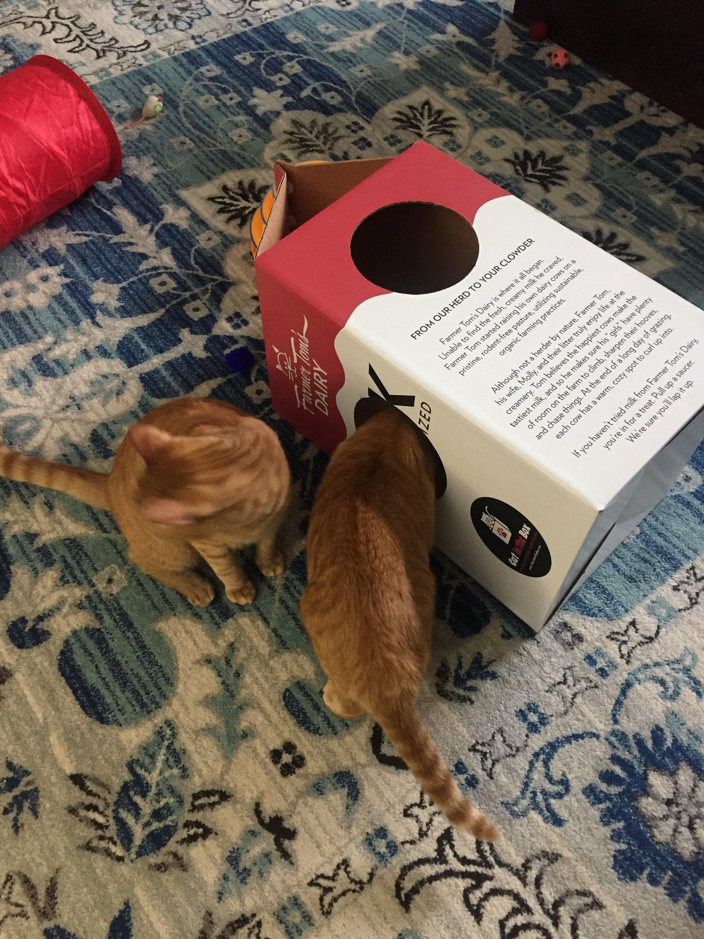 two orange cats playing in the Mega Milk Carton cardboard box toy house