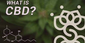Join us Free CBD Education Session @ Two Chicks Apothecary! 12/13 6:30 PM