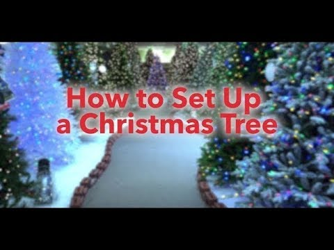 How To Set Up a Christmas Tree