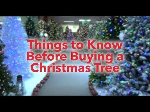 Things to know Before Buying a Christmas Tree