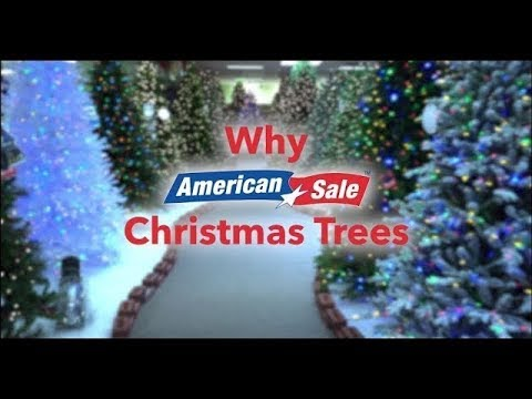 Why Buy a Christmas Tree from American Sale