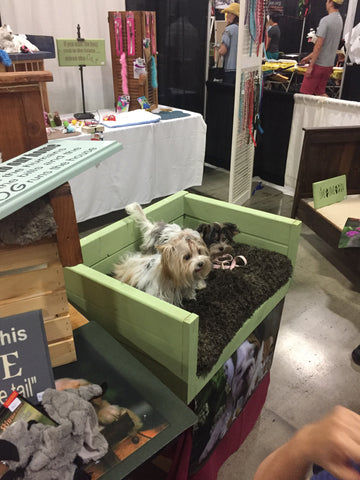 Two cute small dogs looking at people passing by at the Bay Area Pet Fare 2017