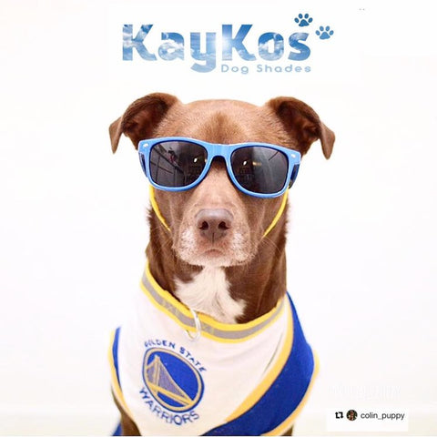 Kaykos dog shades