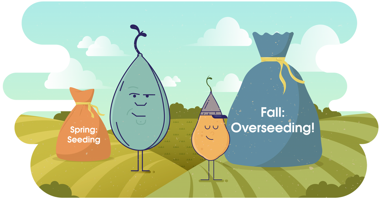 Overseeding: 3 Grass Seed Options to Keep Lawns Green This Winter