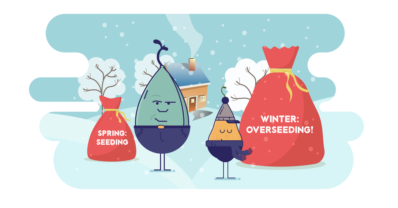 Winter Is Coming...Overseed with The Best Grass Seed Varieties for A Green Spring Lawn