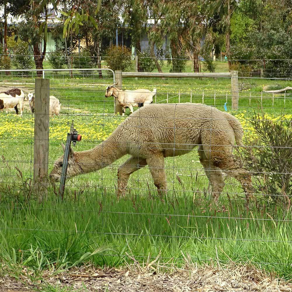 Alpaca Pasture Seed Mix - Cool Climate