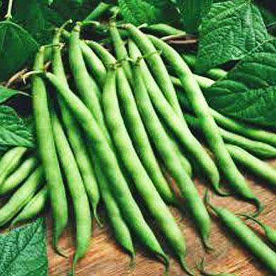 Hancock's Bush Bean