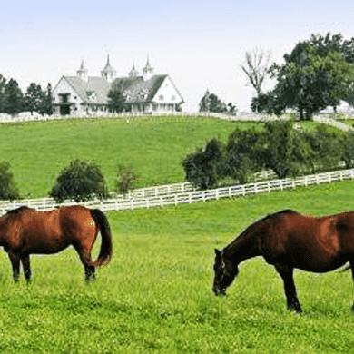 Horse Pasture Grass Seed Mix - Central Climate Mix
