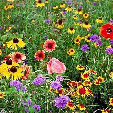 Midwest Wildflower Seed Mix
