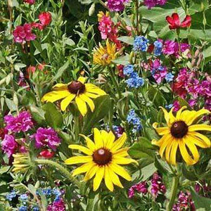 Moist Wildflower Seed Mixture