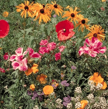 Northwest Wildflower Seed Mix