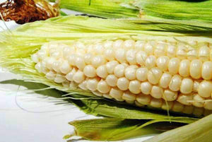 Silver Queen Sweet Corn Seed