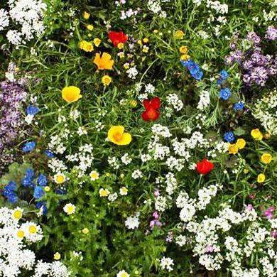Super Short Wildflower Seed Mix