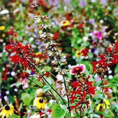 Texas and Oklahoma Wildflower Seed Mix