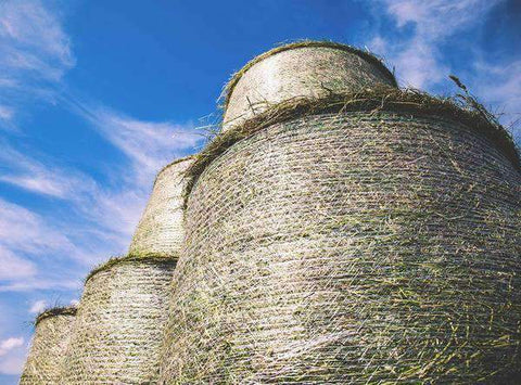 Bahiagrass Cow Hay - Round Roll